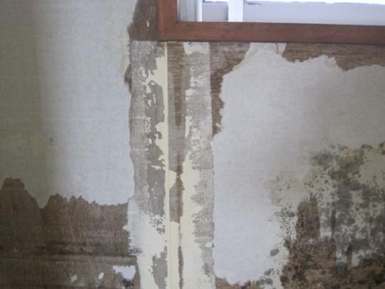 壁 カビ マンション